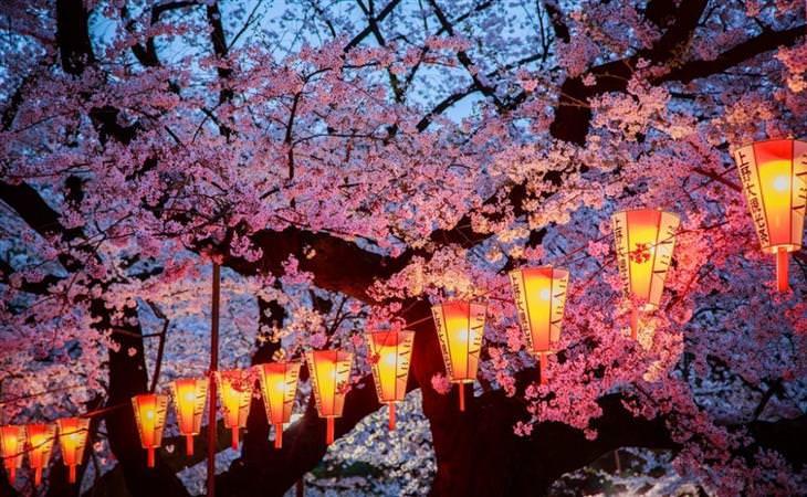 A beleza das cerejeiras em flor em todo o mundo
