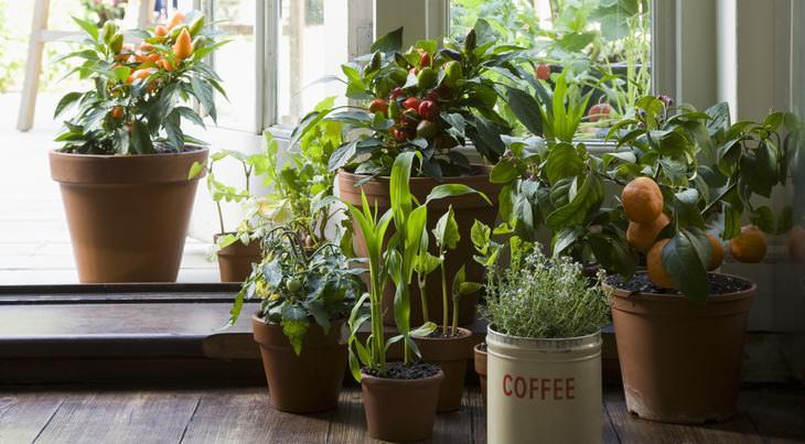 7 plantas aromáticas para um lar agradável
