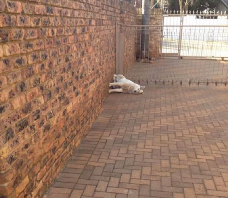 fotos engraçadas de cachorros