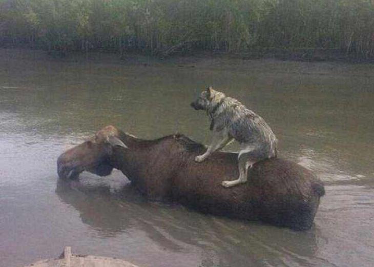 animais hilários