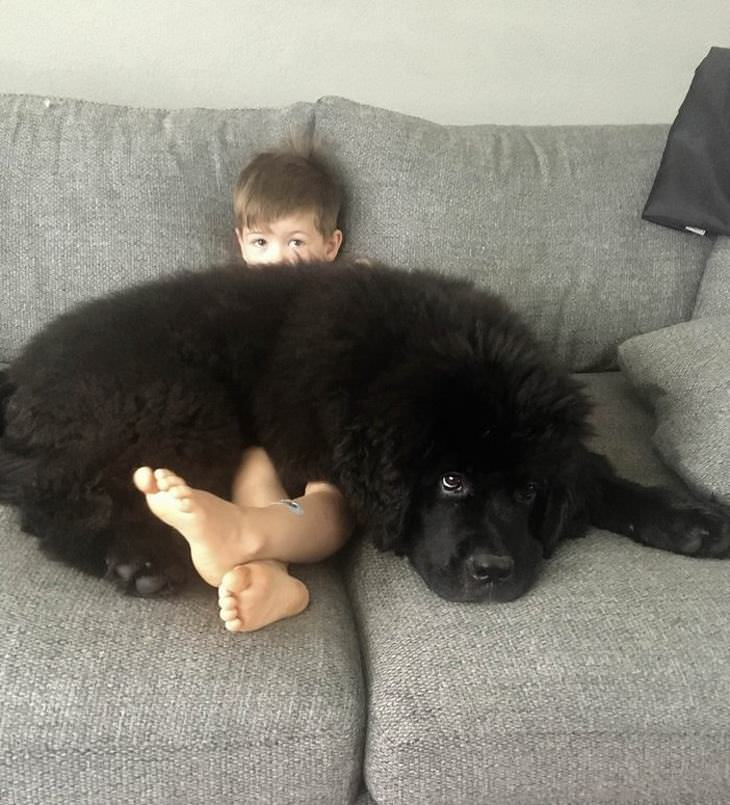 animais grandes