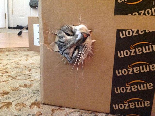 gatos mordendo coisas