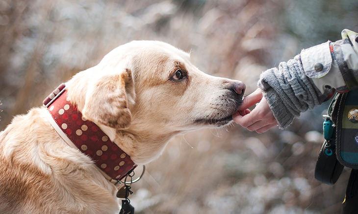 Dicas para que o seu cachorro seja o mais feliz do mundo