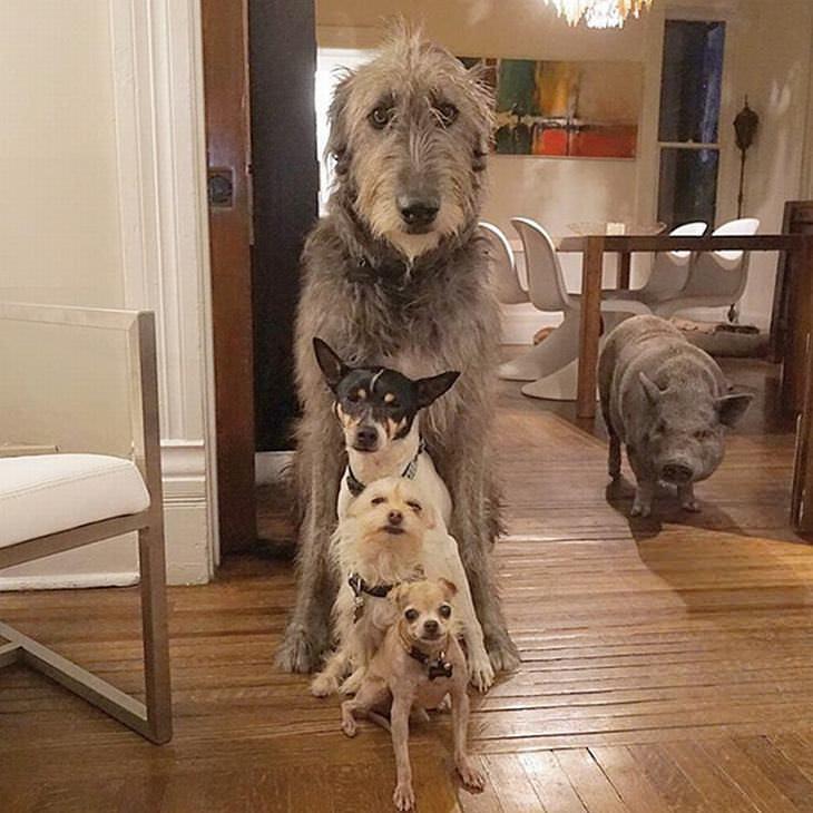 animais adotados