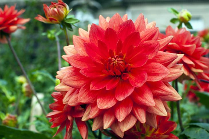 flores mais lindas do mundo