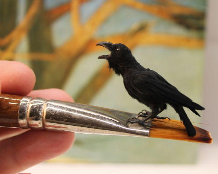 pássaros em miniatura de katie doka