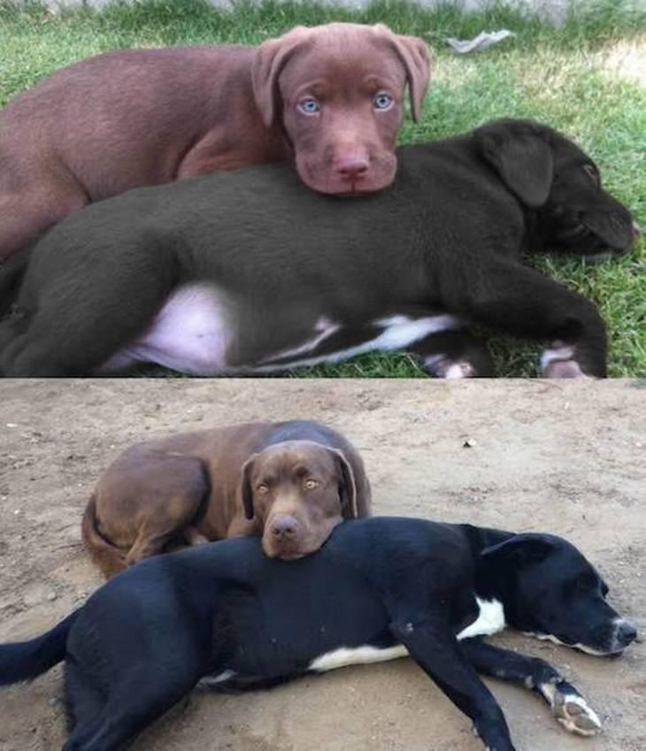 filhotes antes e depois
