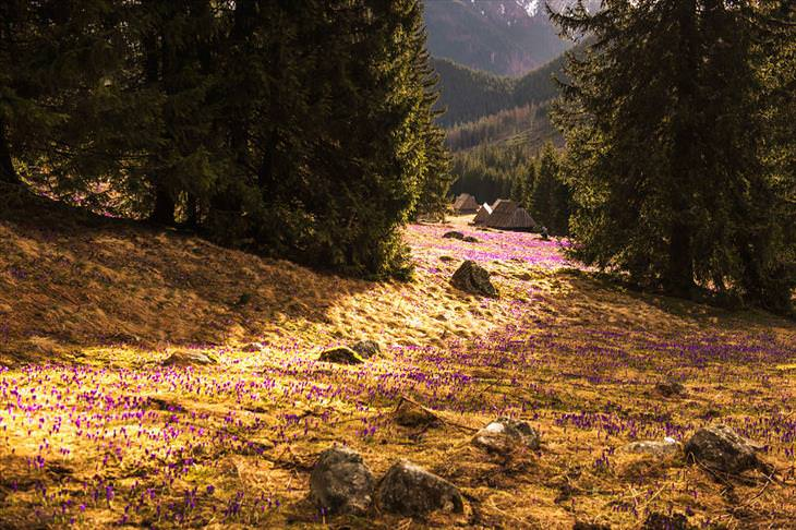 imagens da polônia na primavera