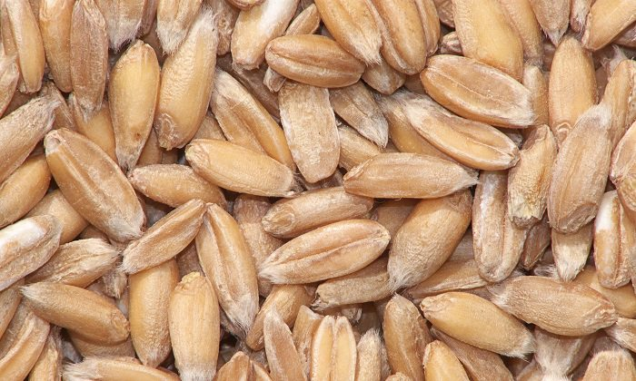 espelta ou trigo vermelho