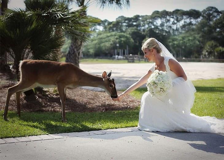 animais selvagens fazendo amizade com humanos
