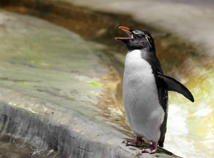 piada do homem que chegam em casa com o pinguim