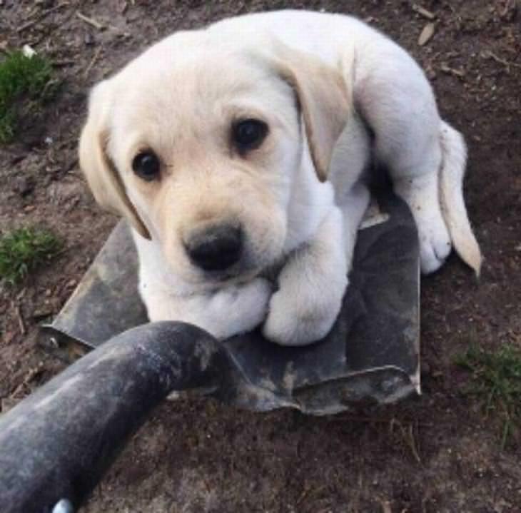 fotos engraçadas  de cachorro