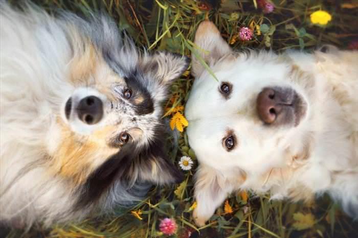 cães fofos