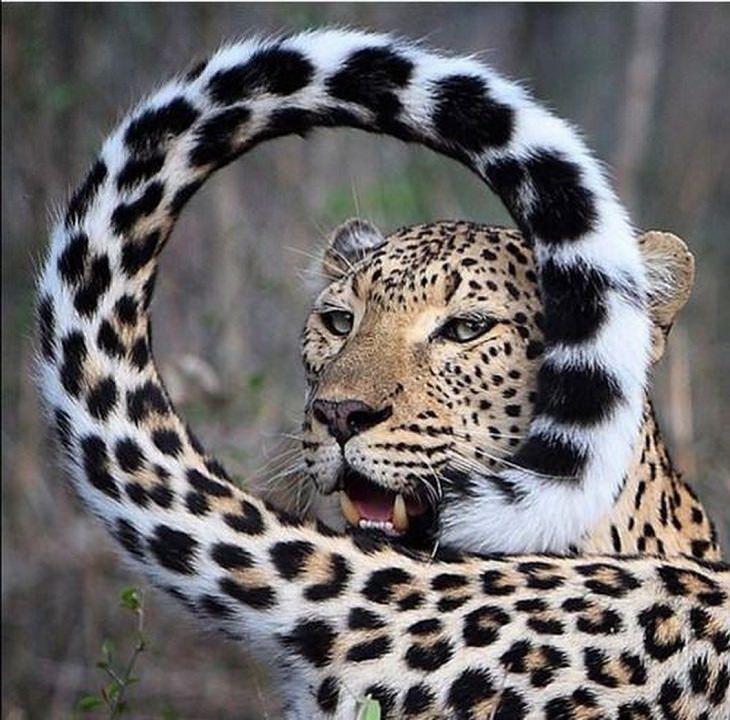 lindos animais