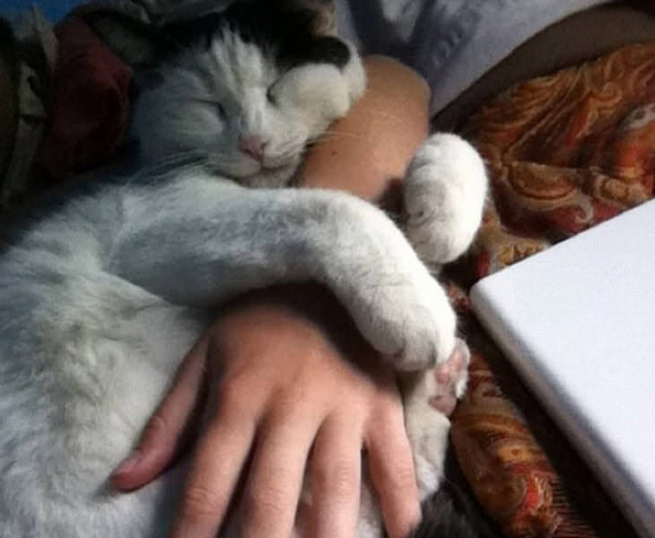 gatos adoráveis