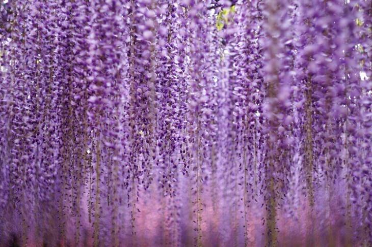 flores noturnas
