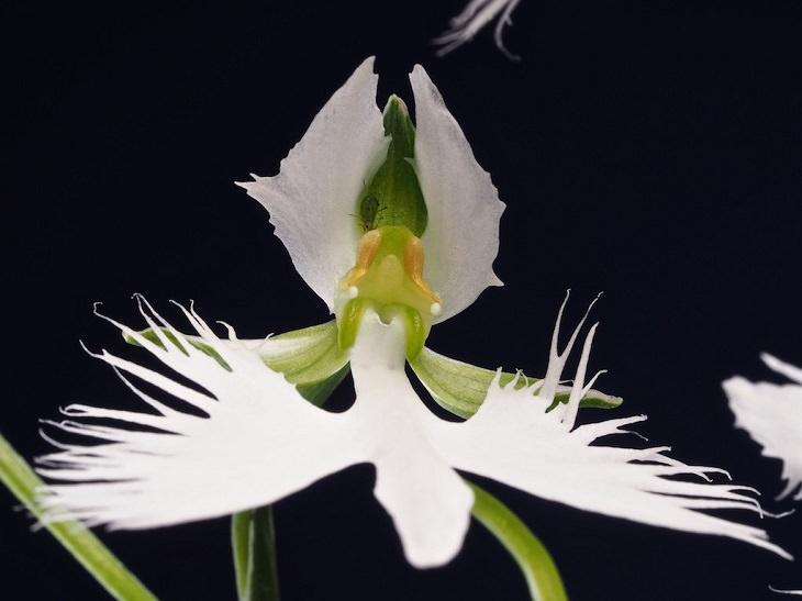 flores especiais