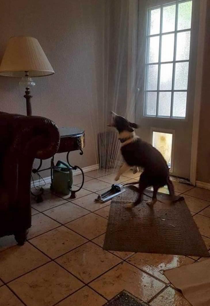 cães engraçados