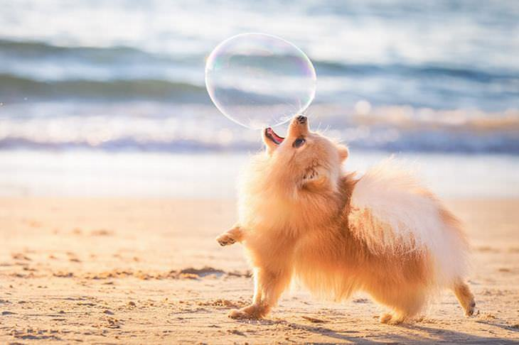 concurso de fotógrafo de cães