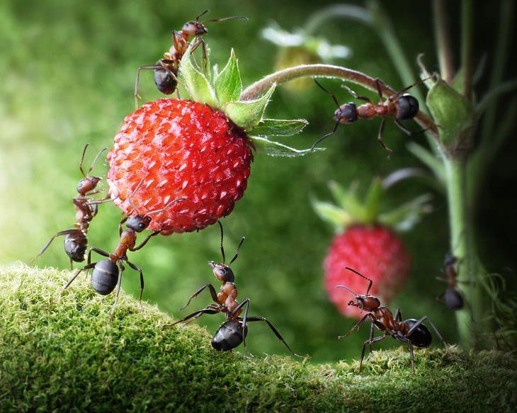utilidades do talco no jardim