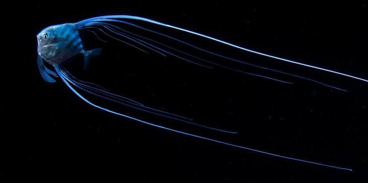 fotos de plânctons