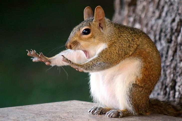fotos hilária de animais