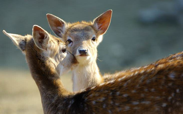 animais afetuosos