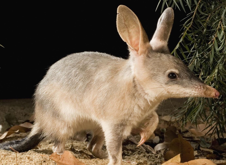 espécie encontrada somente na austrália