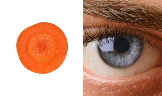 cenoura tem o formato do olho humano e faz bem para os olhos