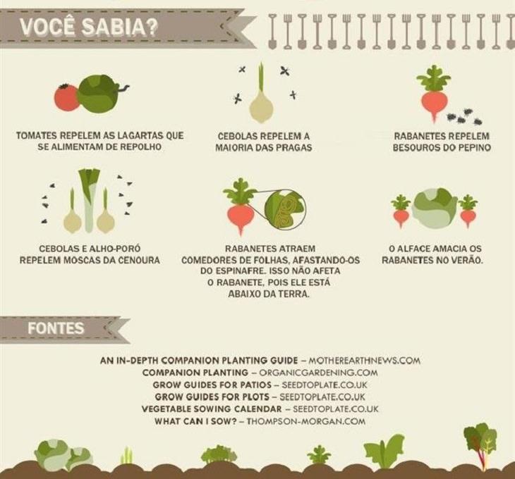 infográfico: como criar uma horta