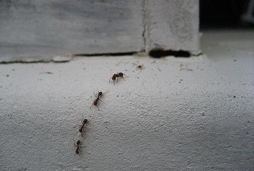 formigas, rato, gelo