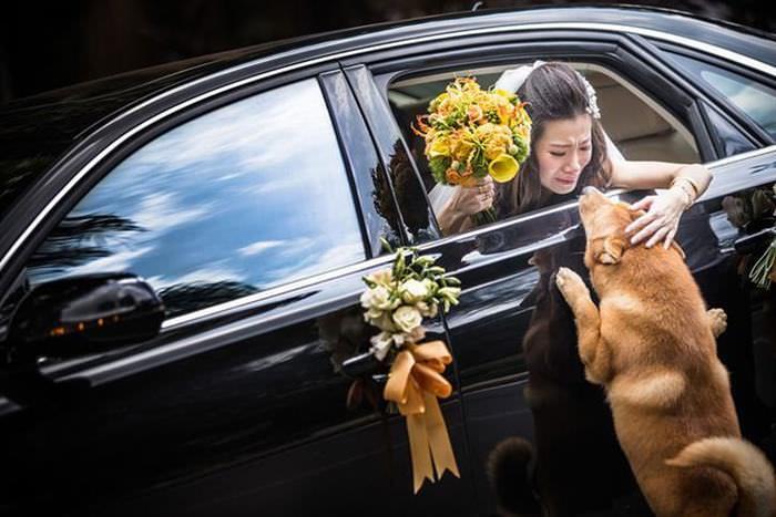 casamentos, fotos