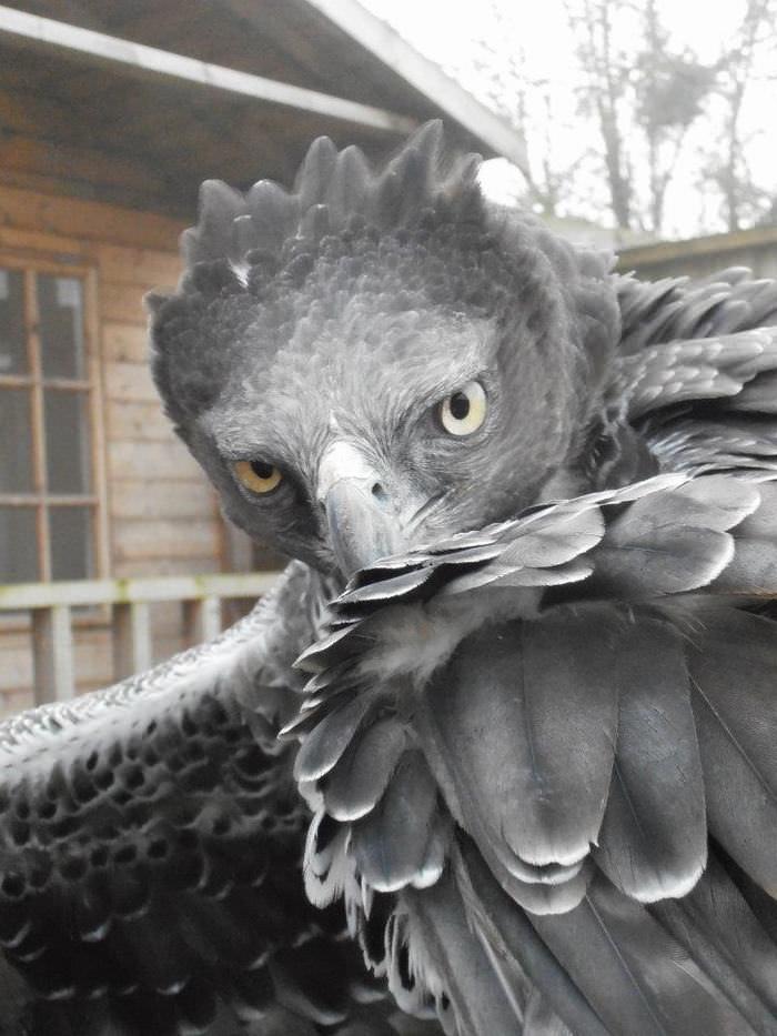 aves, rapina