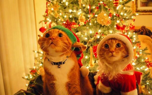 Animais fofos no Natal