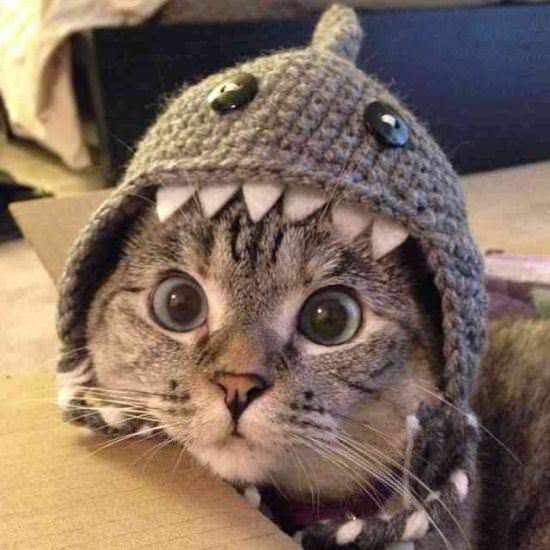 gatos, animais, felinos