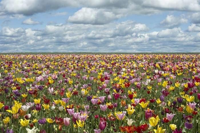 flores, primavera