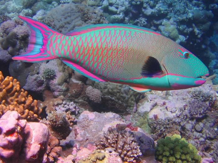 s 12 peixes mais lindos do oceano.