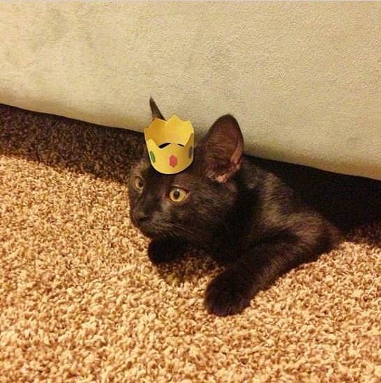 gatos, chapéus