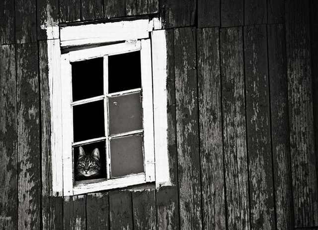 30 Gatinhos Tristes, Esperando na Janela