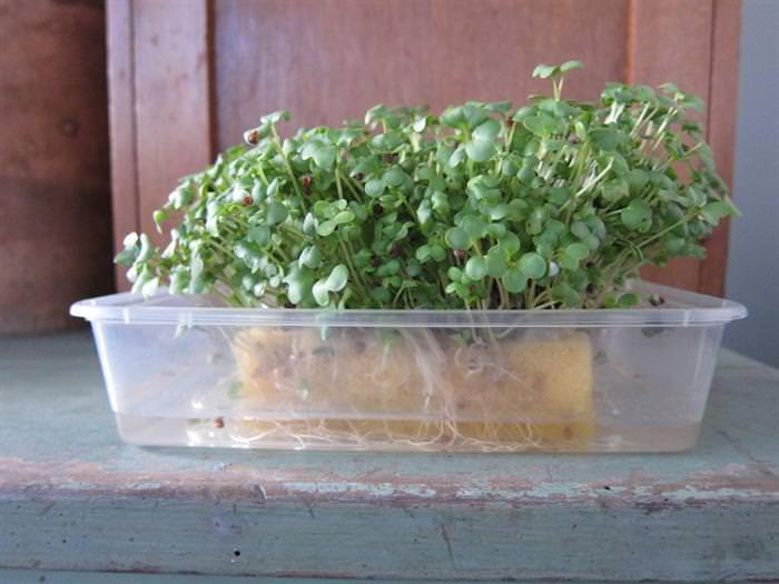 9 Usos Para Esponjas de Cozinha