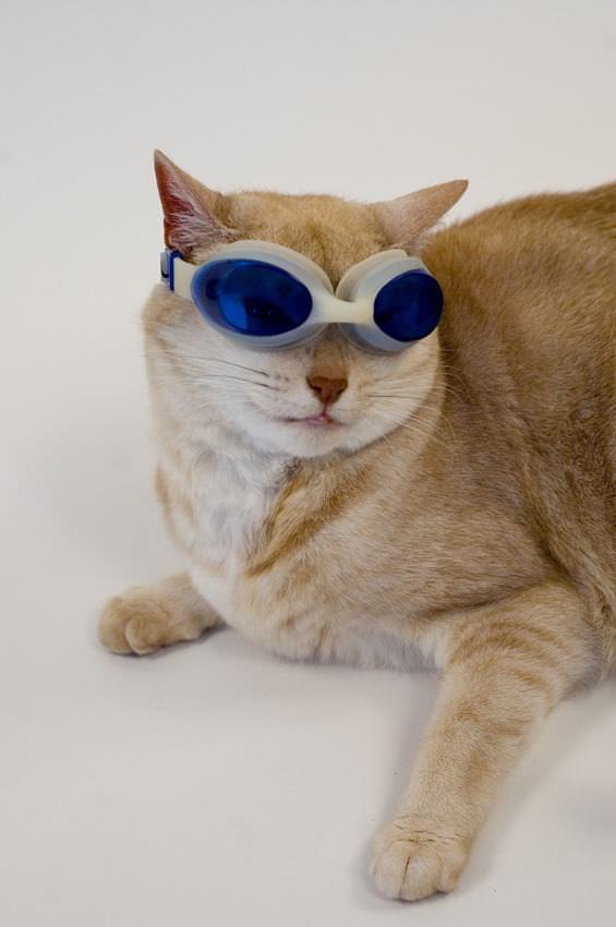Oba! Mais Um Dia de Gato!
