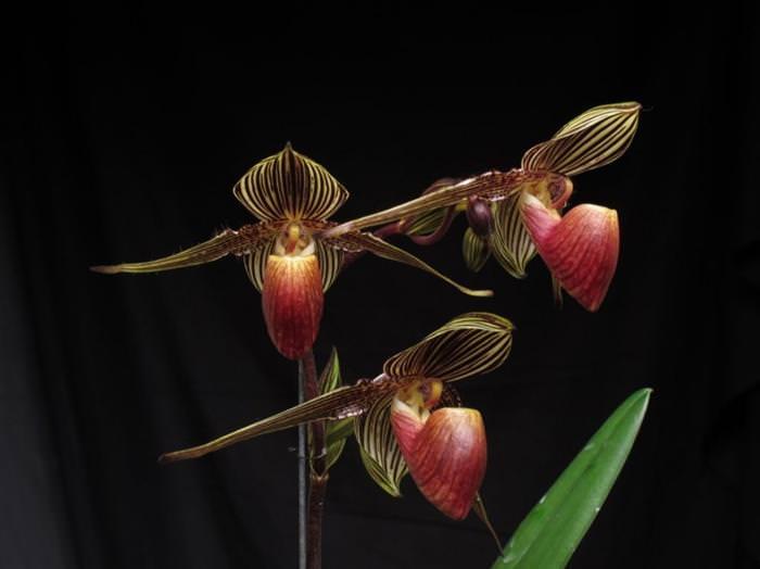 As orquídeas mais belas que você já viu