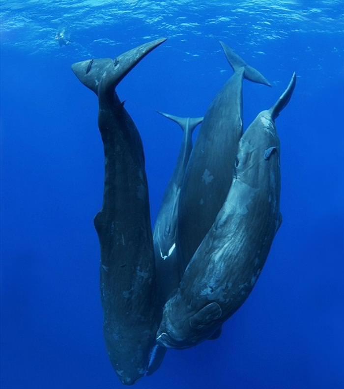20 Fotos de majestosas baleias ao redor do mundo