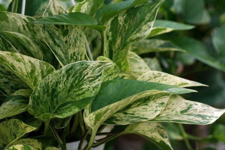 14 plantas tóxicas para seus animais de estimação