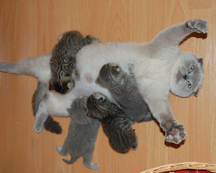 20 Mamães Orgulhosas dos Seus Gatinhos!
