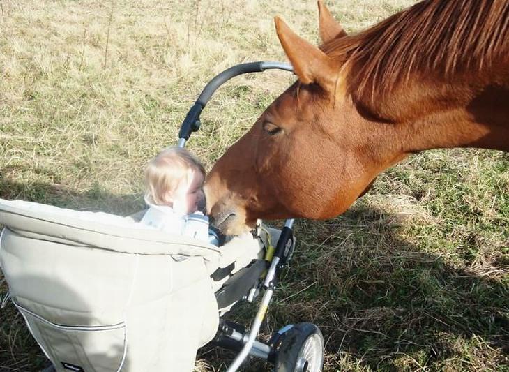 Os Animais São os Melhores Amigos das Crianças!
