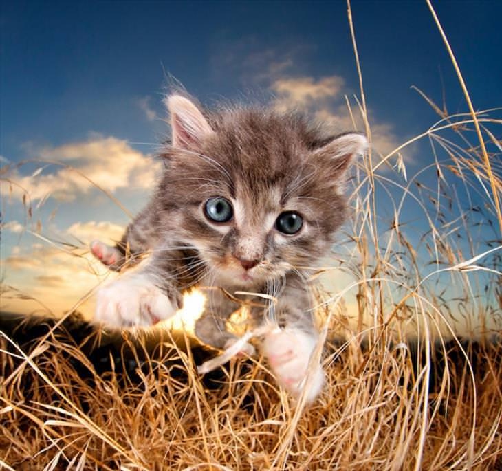 10 gatinhos filhotes assustados