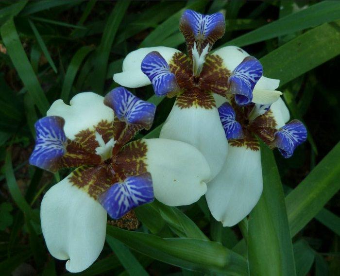 As mais belas flores