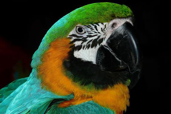 Piada do papagaio curioso