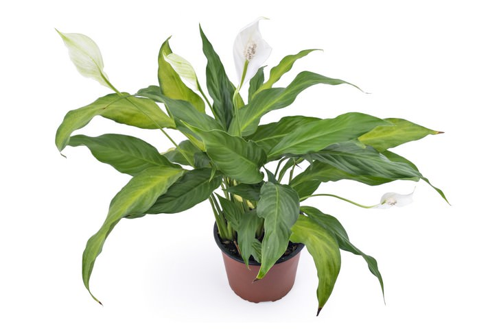 plantas para casa que soltam oxigênio